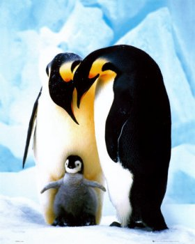 Penguins_Poster_C12182544_1_.jpeg